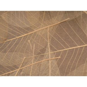 Skelettblattla Sheet - Sun-dried Leaves 0117